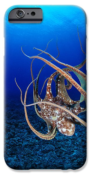 Underwater Photos iPhone Cases - Hawaii, Day Octopus iPhone Case by Dave Fleetham - Printscapes