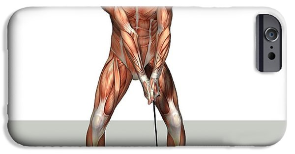 Cut-outs iPhone Cases - Male Muscles, Artwork iPhone Case by Friedrich Saurer