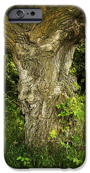 Forest Detail iPhone Cases - Oak Tree Trunk iPhone Case by Donald  Erickson