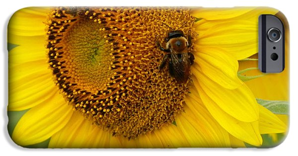 Thinking iPhone Cases - #933 D966 Honey Do Checklist Colby Farm Sunflowers iPhone Case by Robin Lee Mccarthy Photography