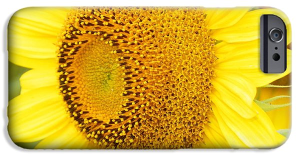 Nature Study iPhone Cases - #933 D967 You Brighten My Day Colby Farm Sunflowers iPhone Case by Robin Lee Mccarthy Photography