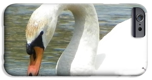 Nature Study iPhone Cases - #934 d994 Swan Kenoza Lake Haverhill Massachusetts iPhone Case by Robin Lee Mccarthy Photography