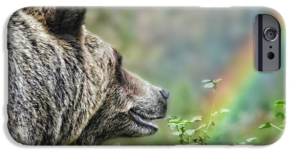 Walking Beat iPhone Cases - A Bear Watching the Sun Return iPhone Case by Jim Fitzpatrick