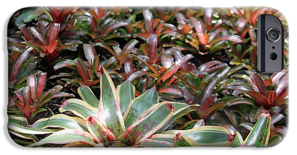 Bromeliad iPhone Cases - A Bevy of Bromeliads iPhone Case by Suzanne Gaff