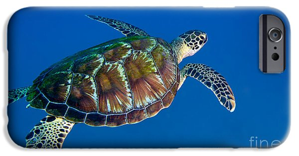 Undersea Photography iPhone Cases - A Black Sea Turtle Off The Coast iPhone Case by Michael Wood