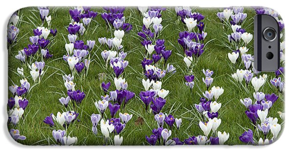 Crocus iPhone Cases - A Carpet of Color iPhone Case by Tim Gainey