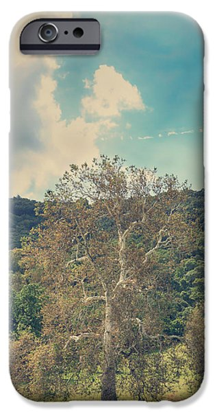 Sycamore iPhone Cases - A Certain State of Being iPhone Case by Laurie Search