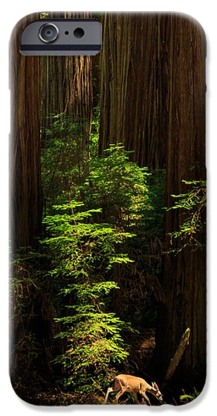 Recently Sold -  - Rural iPhone Cases - A Deer In The Redwoods iPhone Case by James Eddy