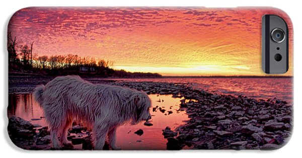 Dogs iPhone Cases - A Doggone Pretty Sunset iPhone Case by Carolyn Fletcher