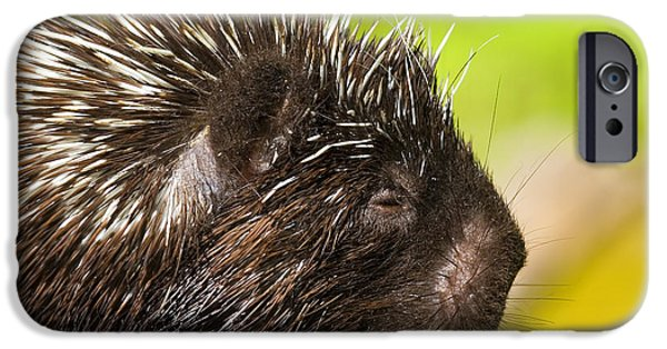 Quill iPhone Cases - A Face Only a Mother Could Love iPhone Case by Mike  Dawson