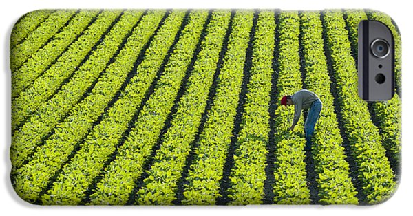 Man Looking Down iPhone Cases - A Farmer Walking Through A Large Green iPhone Case by Scott Sinklier