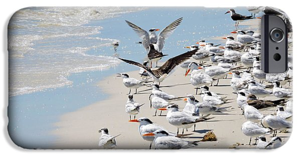 Sea Birds iPhone Cases - A Flock of Seagulls iPhone Case by Marilee Noland