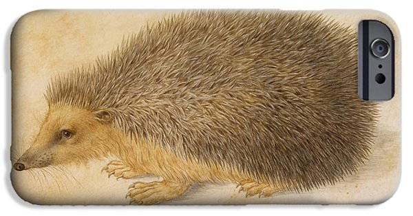 Nature Study Paintings iPhone Cases - A Hedgehog iPhone Case by Hans Hoffmann