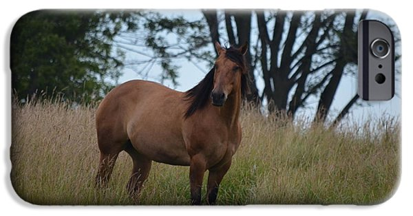 The Horse iPhone Cases - A Horse in the Meadow iPhone Case by Maria Mickschl