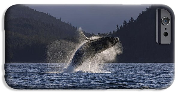 World No. 1 iPhone Cases - A Humpback Whale Leaps From The Waters iPhone Case by John Hyde
