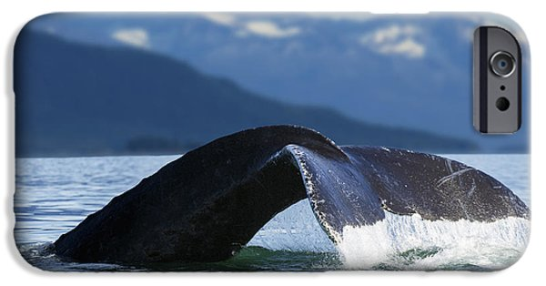 Snowy Day iPhone Cases - A Humpback Whale Lifts Its Flukes iPhone Case by John Hyde