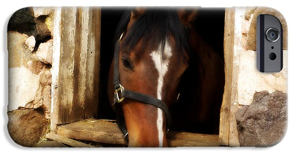 Old Barns iPhone Cases - A Little Nibble iPhone Case by Linda Mishler