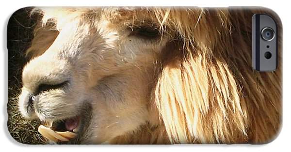 Llama Digital iPhone Cases - A Blond Llamas Alpaca Good Hair Day iPhone Case by Carol F Austin
