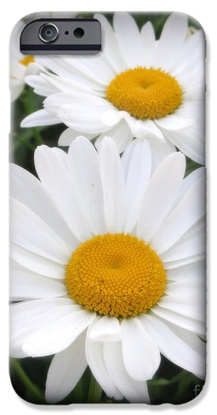 Flora iPhone Cases - A Lovely Pair Of Shasta Daisies iPhone Case by Kay Novy