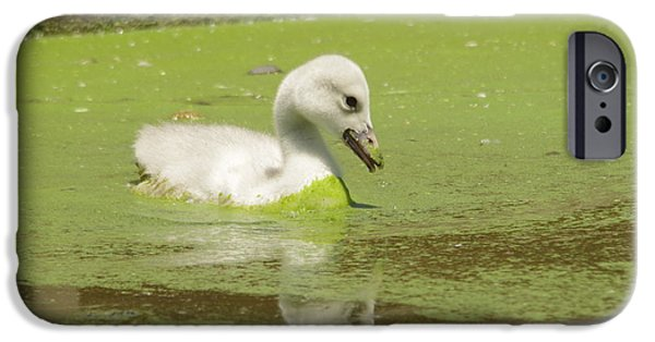 Baby Bird iPhone Cases - A messy Cygnet iPhone Case by Jeff  Swan