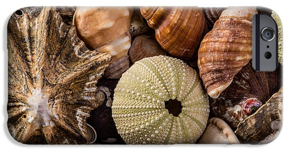 Shape iPhone Cases - A Mix of Seashells iPhone Case by Jacques Jacobsz