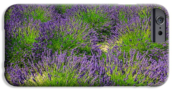 D.c. iPhone Cases - A Pattern of Lavender iPhone Case by Peter Noyce