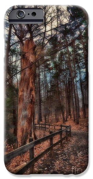 Pathway iPhone Cases - A Seat Under The Pines iPhone Case by Reese Lewis