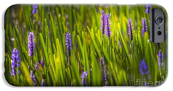 Aquatic Plants iPhone Cases - A Splash Of Sunshine iPhone Case by Marvin Spates