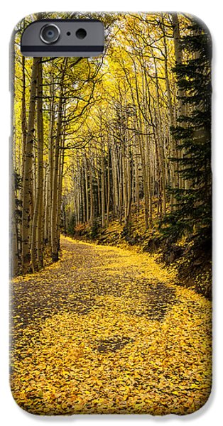 Fall iPhone Cases - A Stroll Among the Golden Aspens  iPhone Case by Saija  Lehtonen