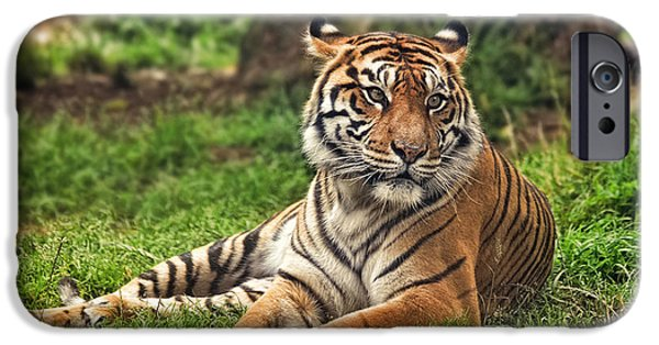 Gray Hair iPhone Cases - A Tiger Relaxing on a Cool Afternoon iPhone Case by Jim Fitzpatrick