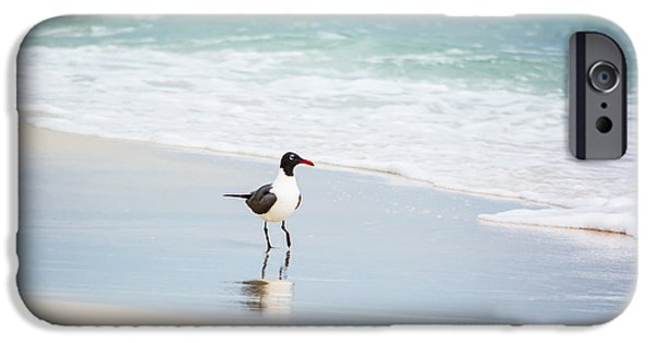 Flying Seagull iPhone Cases - A Walk on the Beach iPhone Case by Shelby  Young
