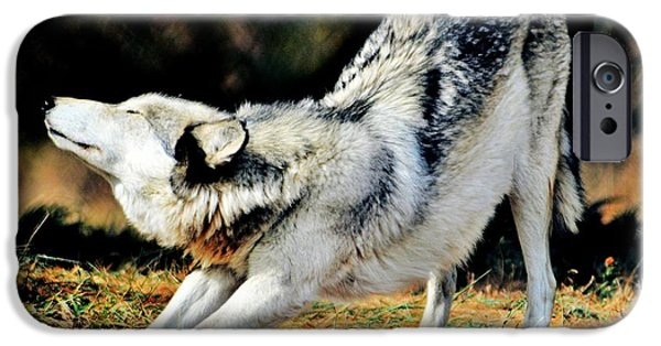 Dog In Landscape iPhone Cases - A Warm Stretch iPhone Case by Michelle McPhillips