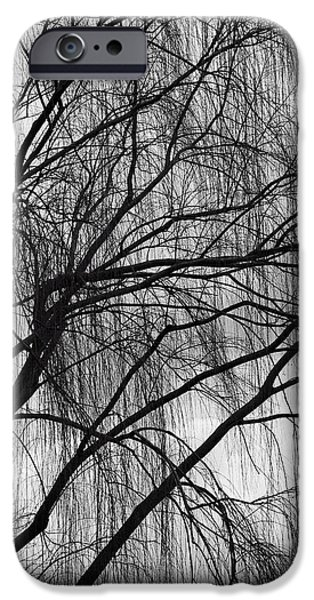 Cora Wandel iPhone Cases - A Weeping Willow In Black And White iPhone Case by Cora Wandel