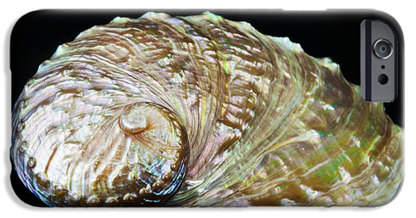 Abalones iPhone Cases - Abalone Shell iPhone Case by Bill Brennan - Printscapes