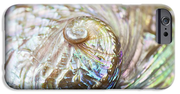 Abalones iPhone Cases - Abalone Shell Close-up iPhone Case by Bill Brennan - Printscapes