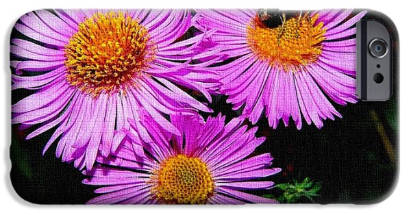 Business Paintings iPhone Cases - Absolute Flower Gloria Catus 1 no. 3. H a iPhone Case by Gert J Rheeders