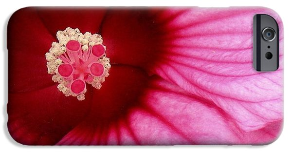 Nature Abstract iPhone Cases - Cirque De Hibisques iPhone Case by Lori Pessin Lafargue