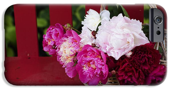 Peonies iPhone Cases - Abundance iPhone Case by Rebecca Cozart