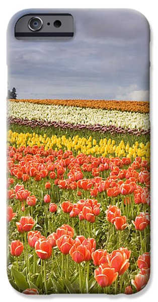Across colorful fields iPhone Case by Mike  Dawson