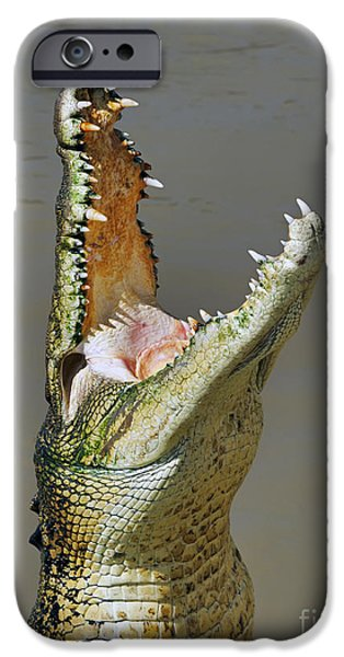 Jaws iPhone Cases - Adelaide River Crocodile iPhone Case by Bill  Robinson