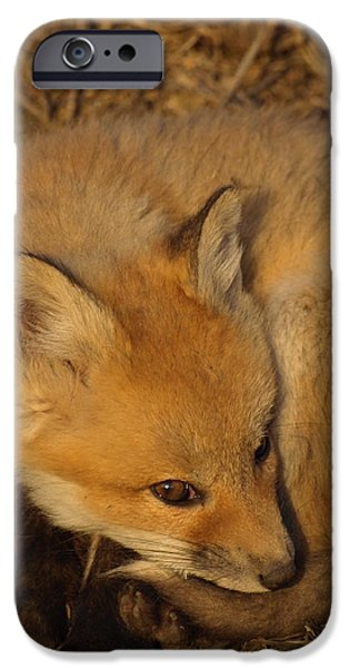 Dog Close-up iPhone Cases - Adorable Fox Kit iPhone Case by James Peterson