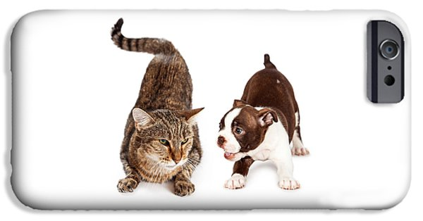 Domestic Animal iPhone Cases - Adult Cat Annoyed With Playful Puppy iPhone Case by Susan  Schmitz