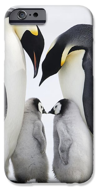 Four Animal Faces iPhone Cases - Adult Emperor Penguins  Aptenodytes iPhone Case by Daisy Gilardini