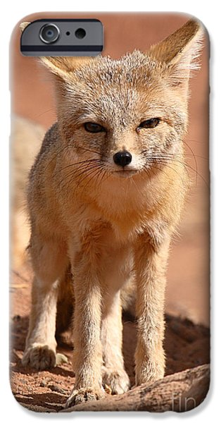 Adult Kit Fox Ears And All iPhone Case by Max Allen