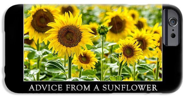 A Sunny Morning iPhone Cases - Advice from a Sunflower iPhone Case by Teri Virbickis