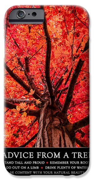 Autumn Scenes iPhone Cases - Advice from a Tree iPhone Case by Teri Virbickis