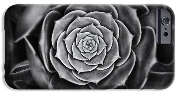 Rosette iPhone Cases - Aeonium Arboreum iPhone Case by Tim Gainey