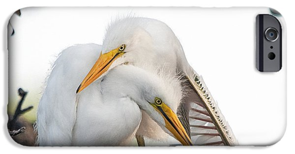 Chicks iPhone Cases - Affectionate Chicks iPhone Case by Kenneth Albin