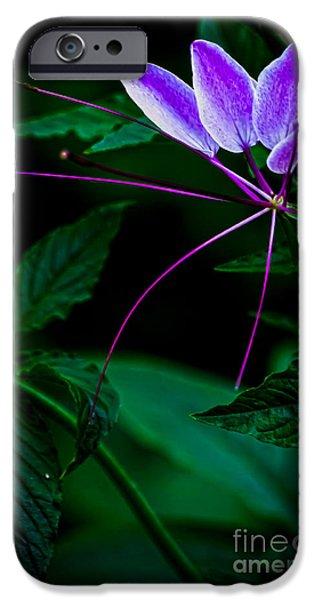 Flora iPhone Cases - Aflutter iPhone Case by James Aiken