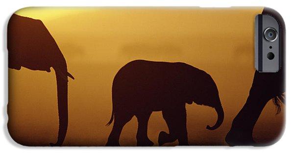 Vertebrata iPhone Cases - African Elephant Loxodonta Africana iPhone Case by Karl Ammann